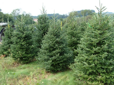 A Christmas Tree Farm
