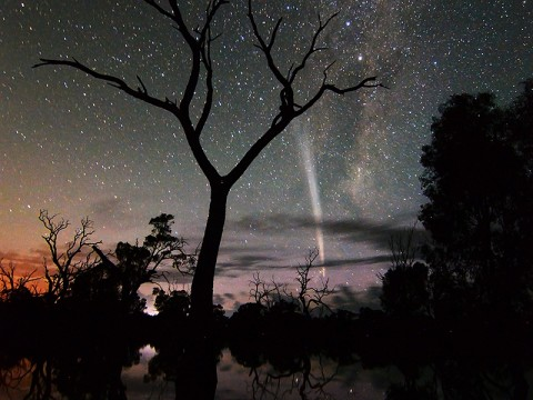 Comet Lovejoy at sunrise on December 25th, 2011. Wayne England took the picture from Poocher Swamp, west of Bordertown, South Australia