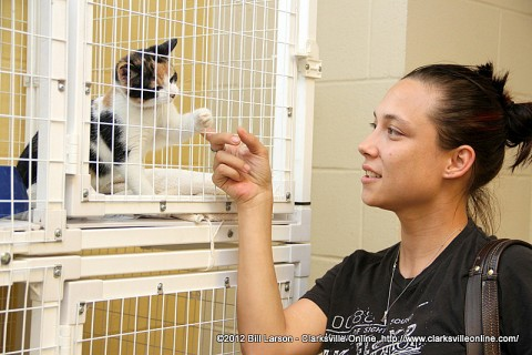 A woman plays with a kitten as she tries to decide if it is the one for her