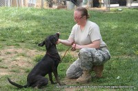 A volunteer working with one of the dogs at the Animal Shelter