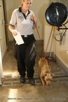 An animal control officer relocates one of the many dogs at the Montgomery County Animal Shelter
