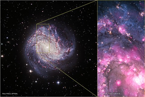 An extraordinary outburst from a black hole where its X-ray output increased at least 3,000 times -- has been seen with NASA's Chandra X-ray Observatory in the galaxy M83.  Chandra observed what is called a ULX, or ultraluminous X-ray source.  The panel on the left features an optical view of the full M83 galaxy, while the right panel shows a close up of the region where the ULX was found with data from Chandra (pink) and Hubble (blue and yellow).   The remarkable behavior of this ULX in M83 provides direct evidence for a population of older, volatile, stellar-mass black holes.