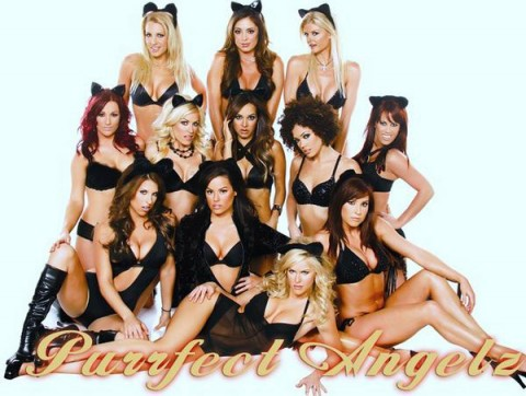 Purrfect Angelz to perform at Appleton Harley-Davidson's Open House Saturday