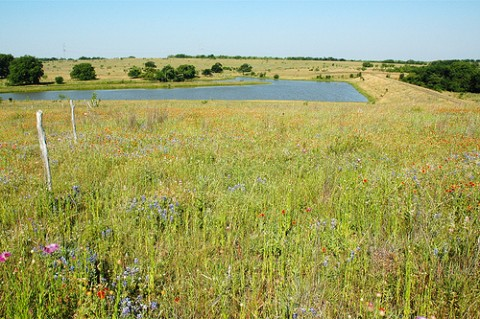 """A pasture on Gary Price's 20,000 acre """"77 Ranch"""" which is located within a watershed that provides drinking water for over 40 percent of Texas' population."""