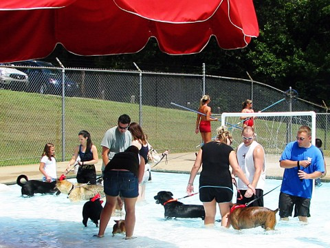 2nd Annual Pooch Pool Party August 11th.