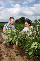 Tara VanToai, retired ARS plant physiologist, and Thomas Doohan, a student at Ohio State University, collect soybean plants and root samples to analyze them for response to flooding stress. (Peggy Greb)
