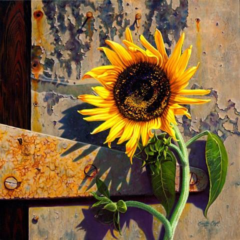 Engel Sunflower