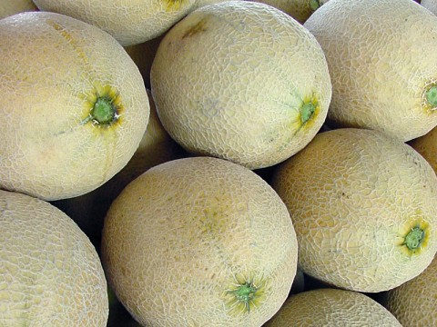 Cantaloupes indentified as source of Salmonella