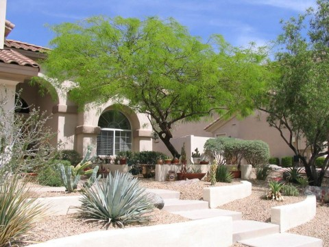 A xeric, or desert, yard in Phoenix: This yard with native vegetation is a mini-refuge for birds. (Susannah Lerman/University of Massachusetts-Amherst)