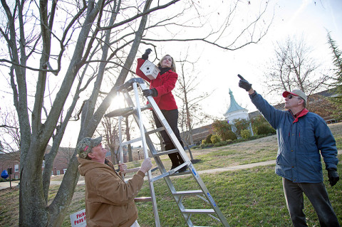 APSU painter Rickey Denton holds a ladder while APSU graduate student Deanna Carter hangs a birdhouse on campus. Dr. Dewey Browder, chair of the APSU Department of History and Philosophy, instructs her where to hang it. (Photo by Beth Liggett/APSU staff).