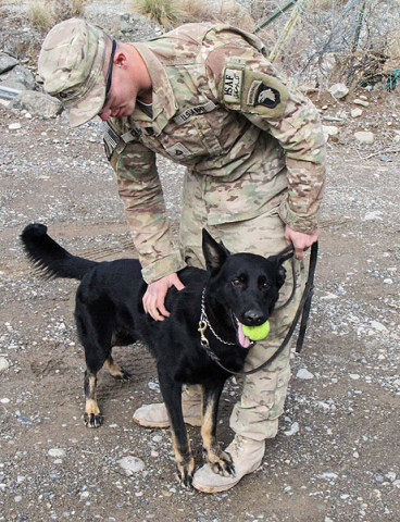 """Pfc. William Clark,an infantryman dog handler assigned to 3rd Brigade Combat Team """"Rakkasans,"""" 101st Airborne Division (Air Assault), rewards Spc. Hugo with some play time after a successful demonstration of bomb detection at Forward Operating Base Salerno, Afghanistan, Feb. 26, 2013. Hugo is a Czech shepard taught to smell the odor of explosives through the Tactical Explosive Detection Dog program. (U.S. photo by Spc. Brian Smith-Dutton Task Force 3/101 Public Affairs)"""