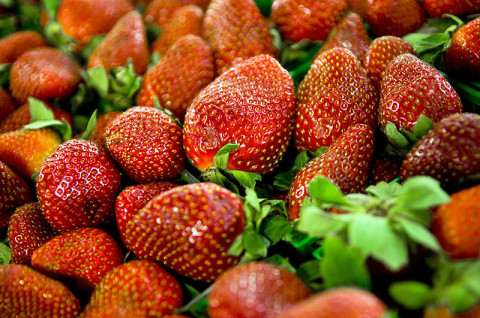 You can expect a great crop of strawberries this year from your local farmers according to the Tennessee Department of Agriculture.