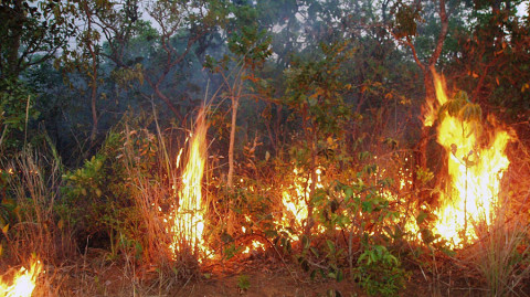 Understory fires doing long term damage to the Amazon Forest. (Credit: Doug Morton)