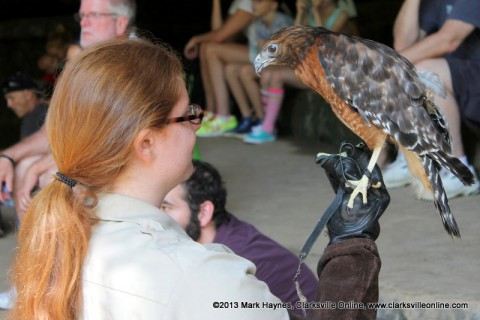 Rebecca Davenport of Paris Landing State Park with a Red-Tailed Hawk at Dunbar Cave State Park.