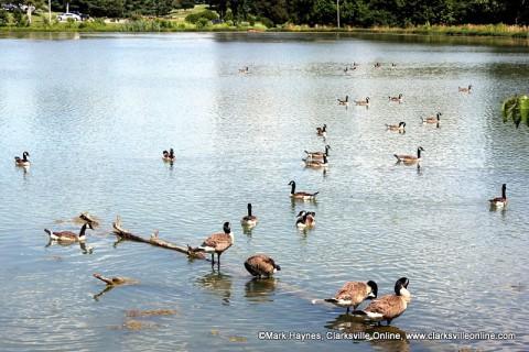 Dunbar Cave State Park - Swan Lake