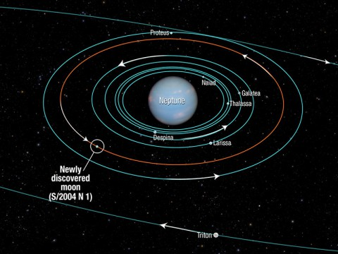 This diagram shows the orbits of several moons located close to the planet Neptune. All of them were discovered in 1989 by NASA's Voyager 2 spacecraft, with the exception of S/2004 N 1, which was discovered in archival Hubble Space Telescope images taken from 2004 to 2009. The moons all follow prograde orbits and are nestled among Neptune's rings (not shown).