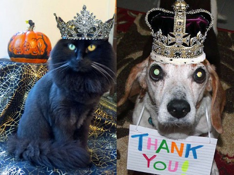 Mr. & Miss Wags to Witches 2012 – Sheba and The Herman