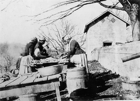 Processing pork at Wessyngton Plantation, about 1890. Taken after emancipation, this photograph conveys the work that was performed by formerly enslaved women at Wessyngton. (Courtesy of the Washington Family private collection)