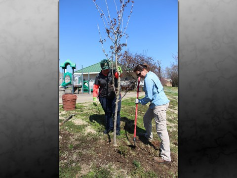 CDE donates trees to Clarksville Parks and Recreation.