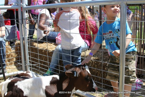A young boy pets a Holstein heifer calf at the City of Clarksville's 2014 Spring Eggstravaganza