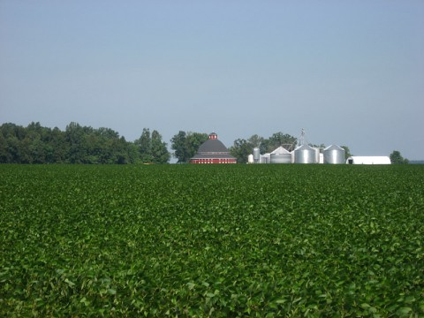 A soybean field in Ohio. (WikiMedia Commons)