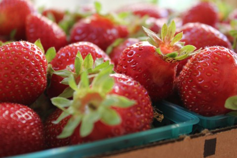 Strawberry Crops will be ready for picking the next few weeks.