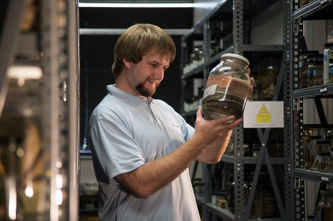 Dustin Owen conducts research in the APSU David H. Snyder Museum of Zoology. (Photo by Taylor Slifko/APSU)