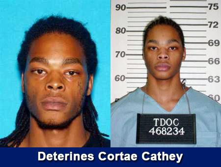 Deterines Cortae Cathey