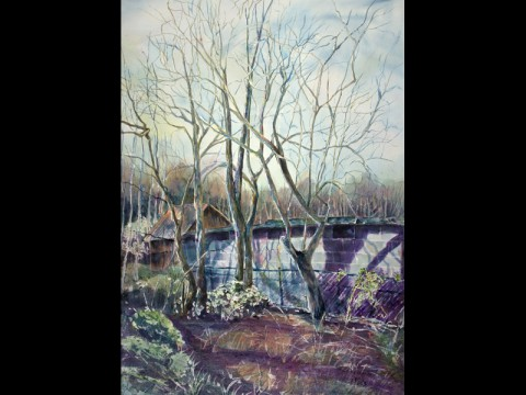 Behind the Shed - Janet Felts