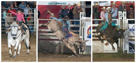 (L to R) A child riding Winchester the gentle Brahma bull and bullriding contestants in action (Ultimate Challenge Bullriding Productions)