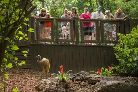 Nashville Zoo Cassowary Exhibit. (Amiee Stubbs)