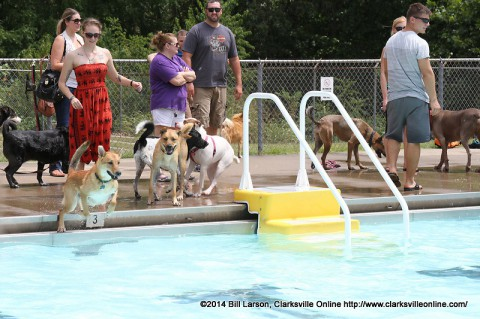 A dog leaps into Swan Lake pool after a ball tossed by his owner during the Clarksville Department of Parks and Recreation's Doggie Pool Party.