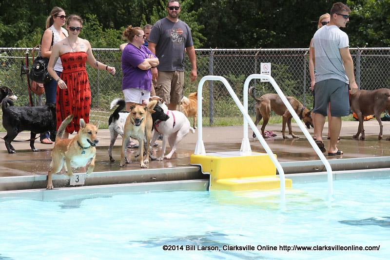 Swan Lake Pool Archives Clarksville Tn Online