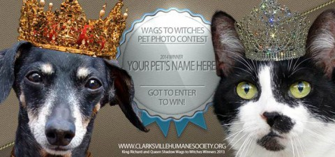 2014 King and Queen of Wags to Witches Pet Photo Contest