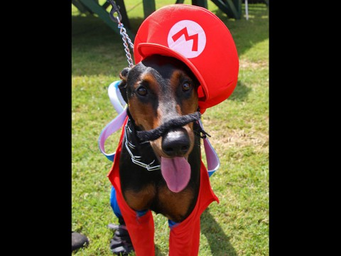 Fun with Fido at Bark in the Park to feature dog-friendly costume contests