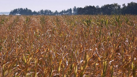 NASA's ECOSTRESS will monitor how plants react to heat and water stress. (Wikimedia Commons)