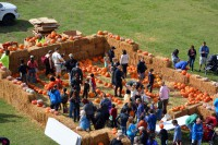 1,500 pumpkins were given away to Campbell Crossing residents at this year's Fall Festival.