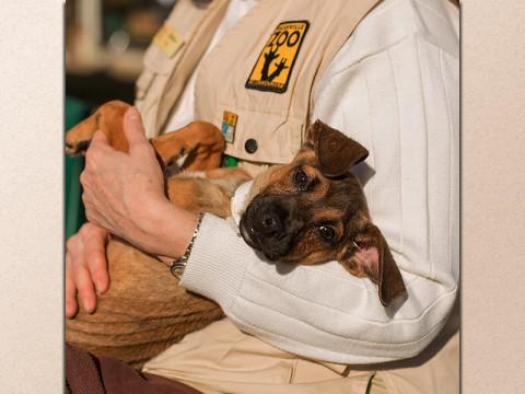 Meet Your Best Friend Animal Adoption Drive at the Nashville Zoo. (Amiee Stubbs)