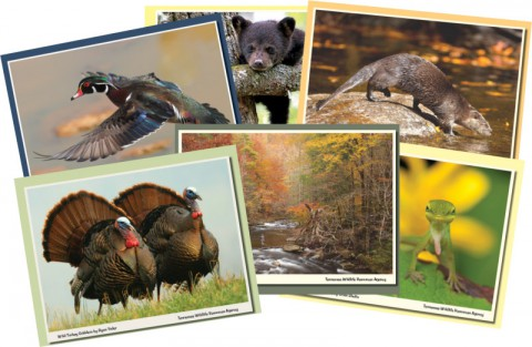 2015-16 Tennessee Wildlife Calendar Photo Contest Underway.
