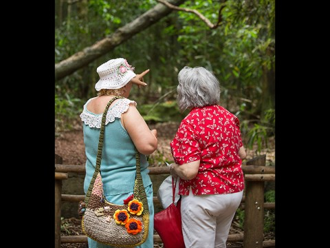 Seniors Invited to Enjoy Free Admission to the Nashville Zoo Courtesy of Cigna-HealthSpring. (Amiee Stubbs)