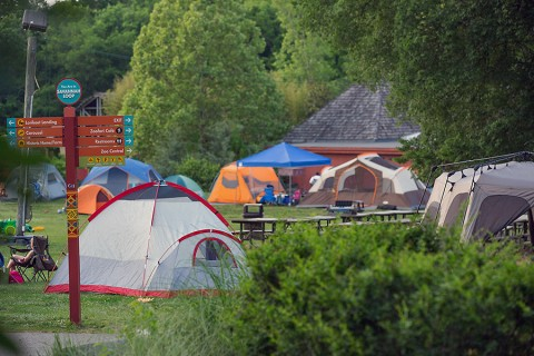 """Nashville Zoo will hold their third annual Girl Scout Camp Out on August 22nd-23rd. The event is called """"Bugs, Biomes and Badges"""". (Amiee Stubbs)"""