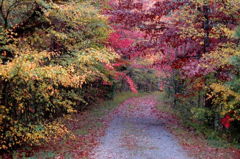 Fall color near Cedar Pond in Land Between The Lakes. (Denise Schmittou)