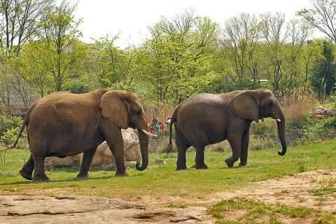 The Nashville Zoo's plan makes way for improved facilities and future elephants. (Christian Sperka)