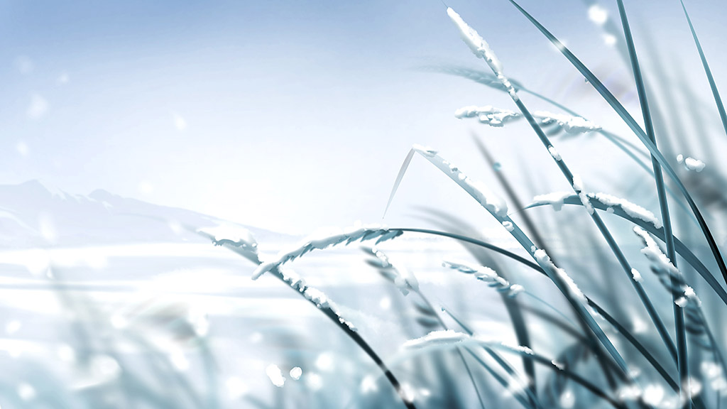 First Frost expected across Clarksville-Montgomery County this weekend.