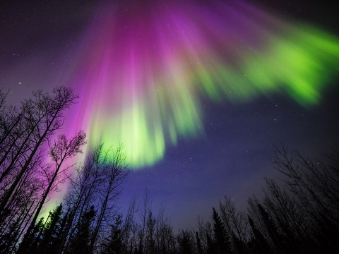 This image of a colorful aurora was taken in Delta Junction, Alaska, on April 10, 2015. All auroras are created by energetic electrons, which rain down from Earth's magnetic bubble and interact with particles in the upper atmosphere to create glowing lights that stretch across the sky. (Image courtesy of Sebastian Saarloos)