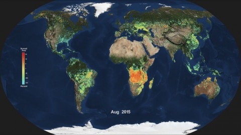 Monthly average global burned area for Aug. 2015, produced from NASA's MODIS instrument. Light blue indicates a smaller percentage of burned area, while red and orange indicate a higher percentage of burned area. (NASA)