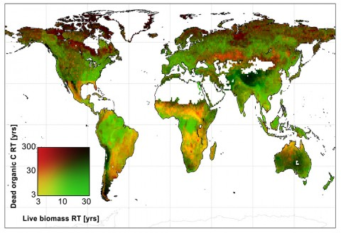 Global map of the average amount of time that live biomass carbon and dead organic carbon spend in carbon reservoirs around the world, in years. (A. Anthony Bloom)