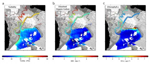 Maps of a) turbidity (water clarity), b) dissolved organic carbon and c) chlorophyll-a in the San Francisco Bay-Delta Estuary's Grizzly Bay and Suisun Marsh in April 2014, derived from remote-sensing reflectance data from NASA's airborne Portable Remote Imaging Spectrometer (PRISM) instrument. (NASA/JPL-Caltech)