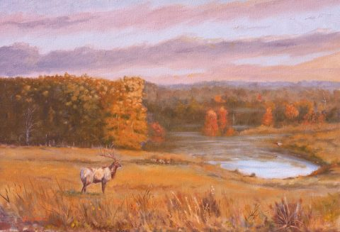 Morning Challenge - Elk at LBL. (Larry R. Richardson)