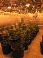 Marijuana indoor grow operation found in Macon County.